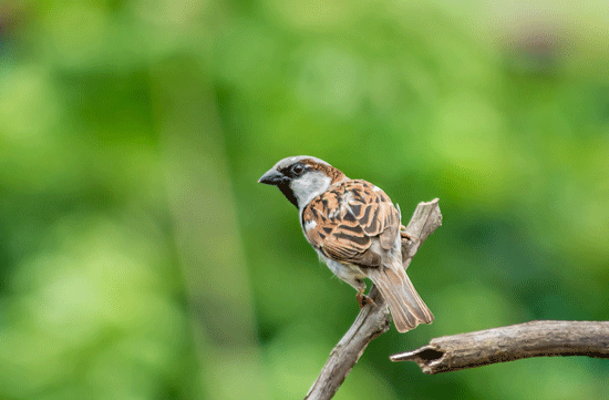 Brown bird on a branch